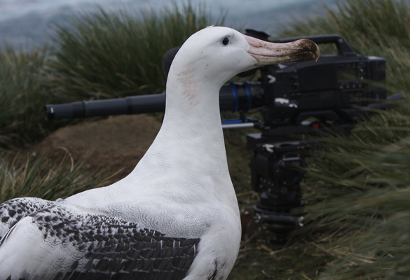 albatross and camera
