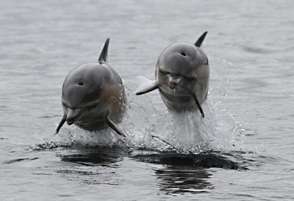 dolphinsheadon