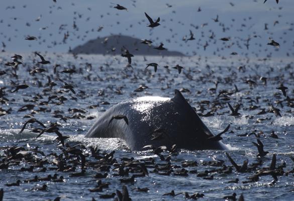 whaleandshearwaters